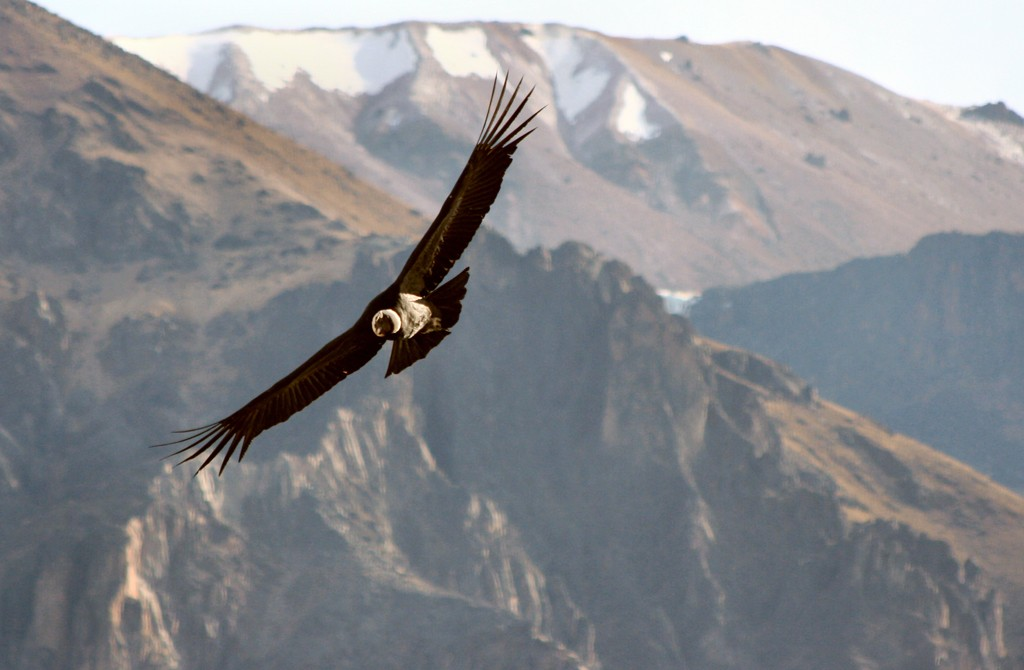 Majestuoso Sur - Arequipa